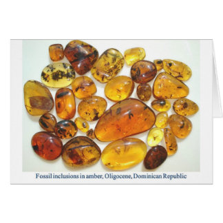 Fossil inclusions in Oligocene Dominican amber Cards