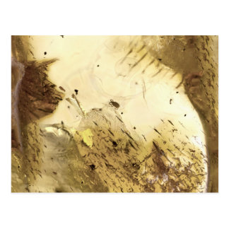Fossil insect in amber | postcard