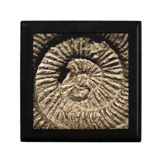 Fossil nature keepsake box