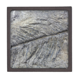 Fossil Plant Jewelry Box