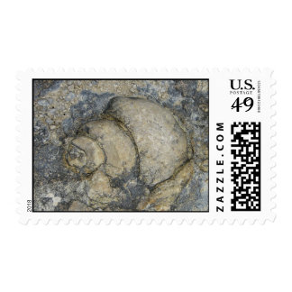 Fossil Postage Stamp