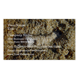 Fossil root in limestone business card templates