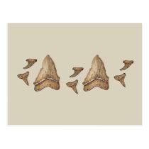 Fossil Shark Teeth Postcard