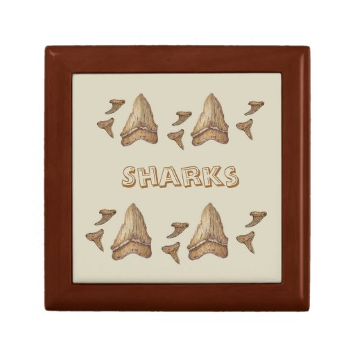 Fossil Sharks Teeth Gift Box