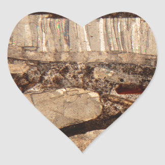 Fossil shells under the microscope heart sticker