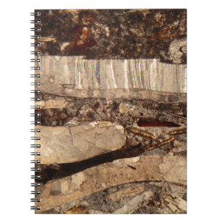 Fossil shells under the microscope notebook