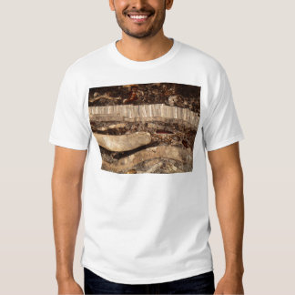 Fossil shells under the microscope t-shirt