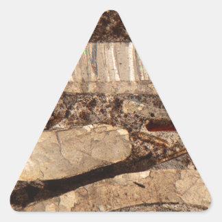 Fossil shells under the microscope triangle sticker
