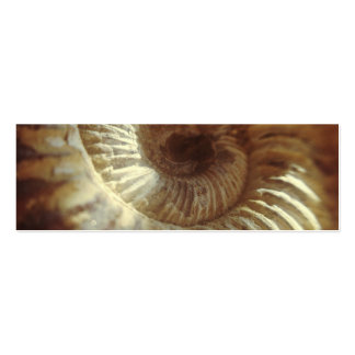 Fossil Sitting In Sun Light Business Card Template