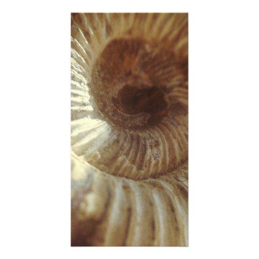 Fossil Sitting In Sun Light Customized Photo Card