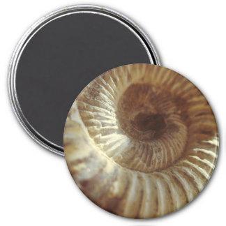 Fossil Sitting In Sun Light Magnet