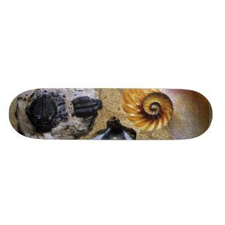 Fossil Skateboard