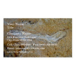 Fossil twig in limestone business cards