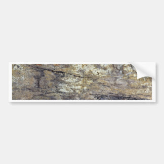 Fossil Wood Bumper Sticker
