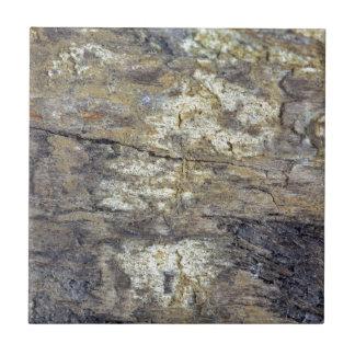 Fossil Wood Ceramic Tile