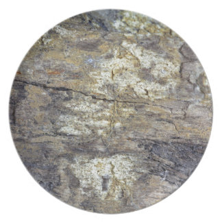 Fossil Wood Dinner Plate