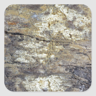 Fossil Wood Square Sticker
