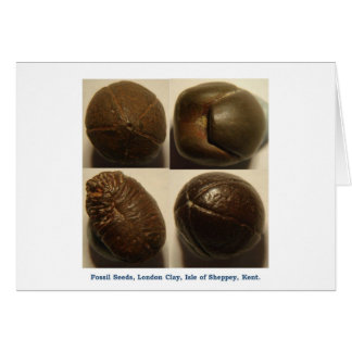 Fossilised pyrite seeds greeting cards