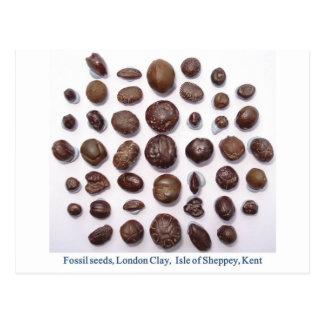 Fossilised seeds postcard