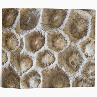 Fossilized Coral Closeup Photo 3 Ring Binder