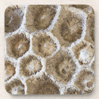 Fossilized Coral Closeup Photo Drink Coaster