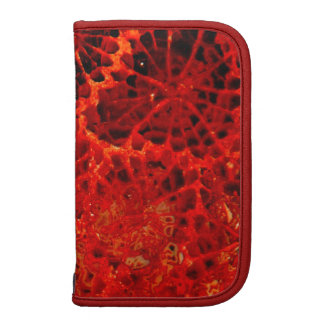 Fossilized coral red dyed stone organizers