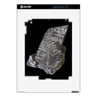 Fossilized Fern Leaves Photo on Black Skin For The iPad 2