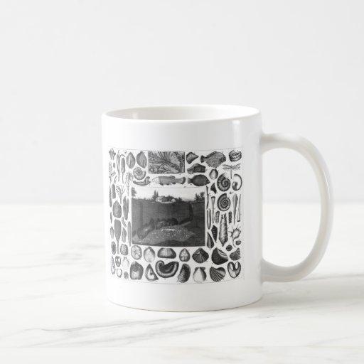 FOSSILS CLASSIC WHITE COFFEE MUG