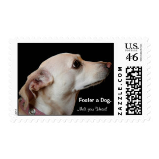 Foster a dog - and Melt Your Heart! Stamps