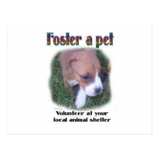 Foster a pet postcard