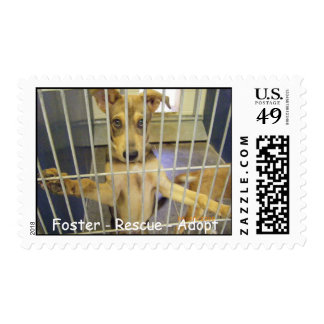 Foster - Rescue - Adopt Postage2 Postage Stamp