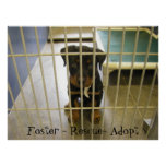 Foster - Rescue - Adopt Poster1 Poster