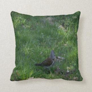 foto 11 del pájaro almohada