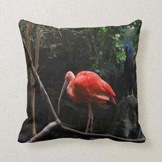 Foto 15 Pigoen y Ibis del pájaro Almohada