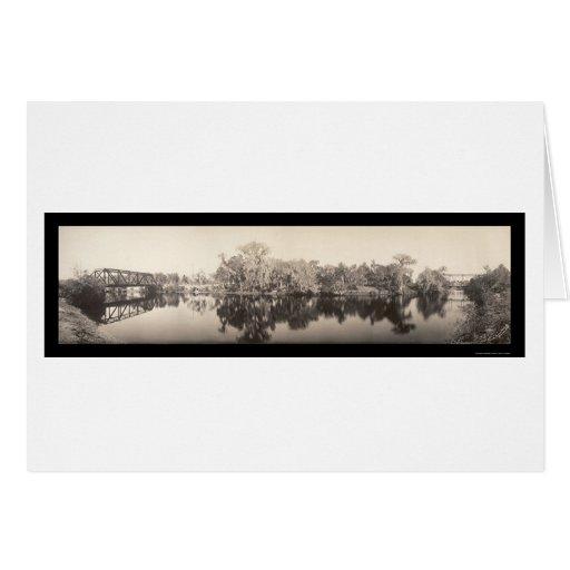 Foto 1909 de Sulphur Springs Tampa Tarjetón