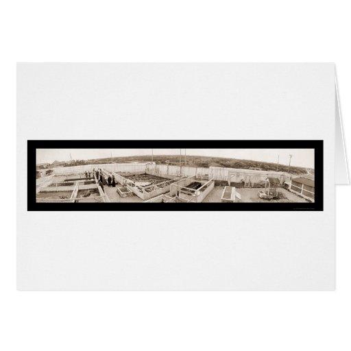 Foto 1910 de la Florida de la granja del cocodrilo Felicitaciones