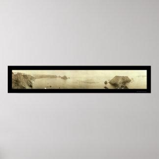 Foto 1911 de Mendocino CA de los alces Poster
