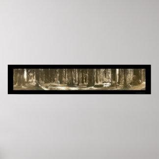 Foto 1912 de la secoya de la obra de dioses póster