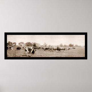 Foto 1912 del Ranching AZ del ganado Poster