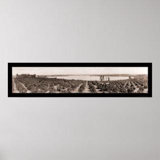 Foto 1919 de la Florida de la ciudad de Haines Póster