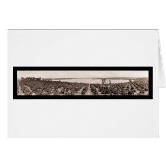 Foto 1919 de la Florida de la ciudad de Haines Tarjetas