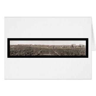 Foto 1928 de la cosecha de la espinaca tarjeta de felicitación