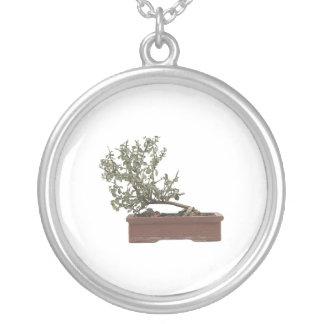 Foto 1 de los bonsais joyería