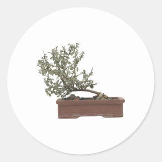Foto 1 de los bonsais pegatina redonda
