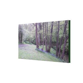 Foto 236 del arbolado del Bluebell Impresión En Lienzo
