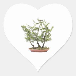 Foto 2 de los bonsais pegatina en forma de corazón