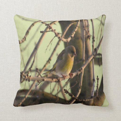 foto #2 del pájaro almohada