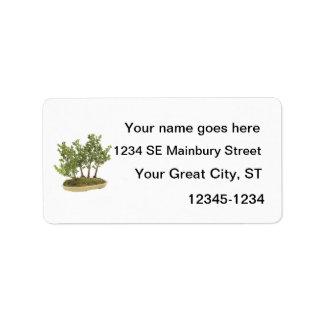 Foto 3 de los bonsais etiqueta de dirección