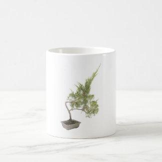 Foto 6 de los bonsais taza básica blanca