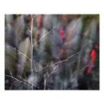 foto abstracta de la rama